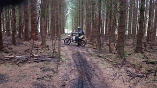 Woods on trans euro trail